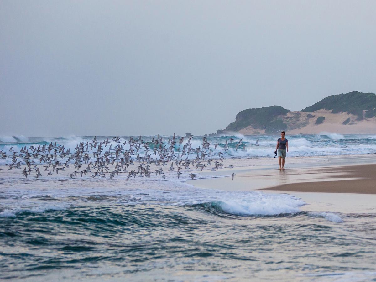 busch_beach_erlebnisse_in_zimbabwe_mozambique