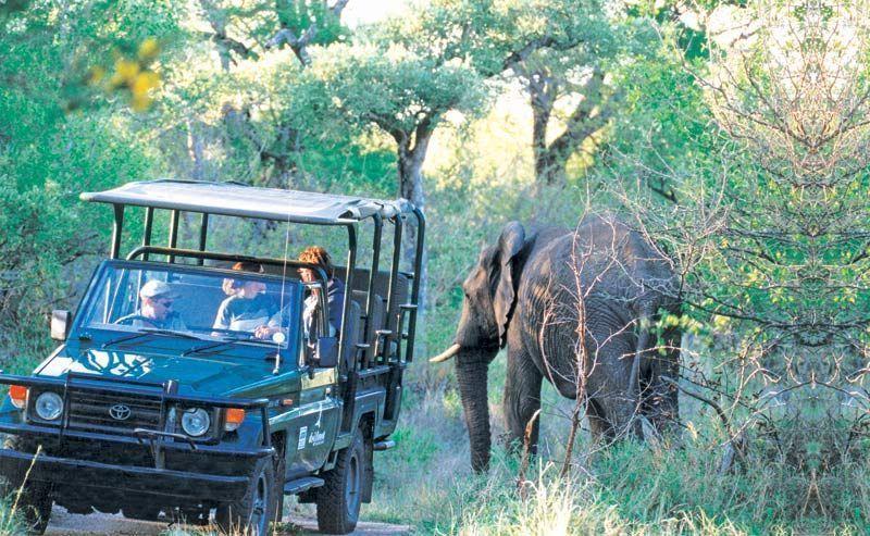 busch_safari_im_kruger_park