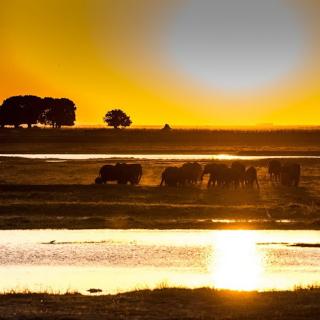 sunway_botswana_chobe_elephants_dirk_reiche-2_20171003_1283059616
