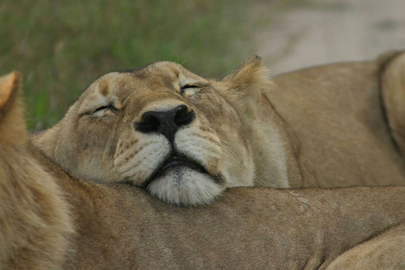 drei_flusse_budget_lodge_safari