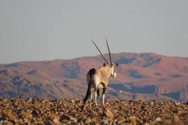 entdeckungsreise_namibia