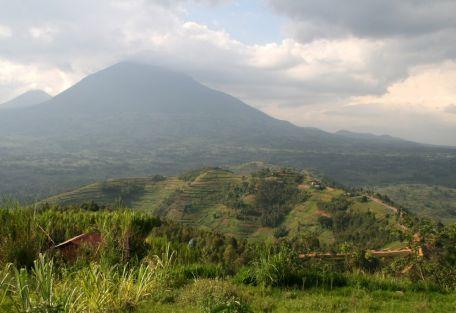 gorilla_-trekking_-im_-mgahinga_-gorilla_-nationalpark