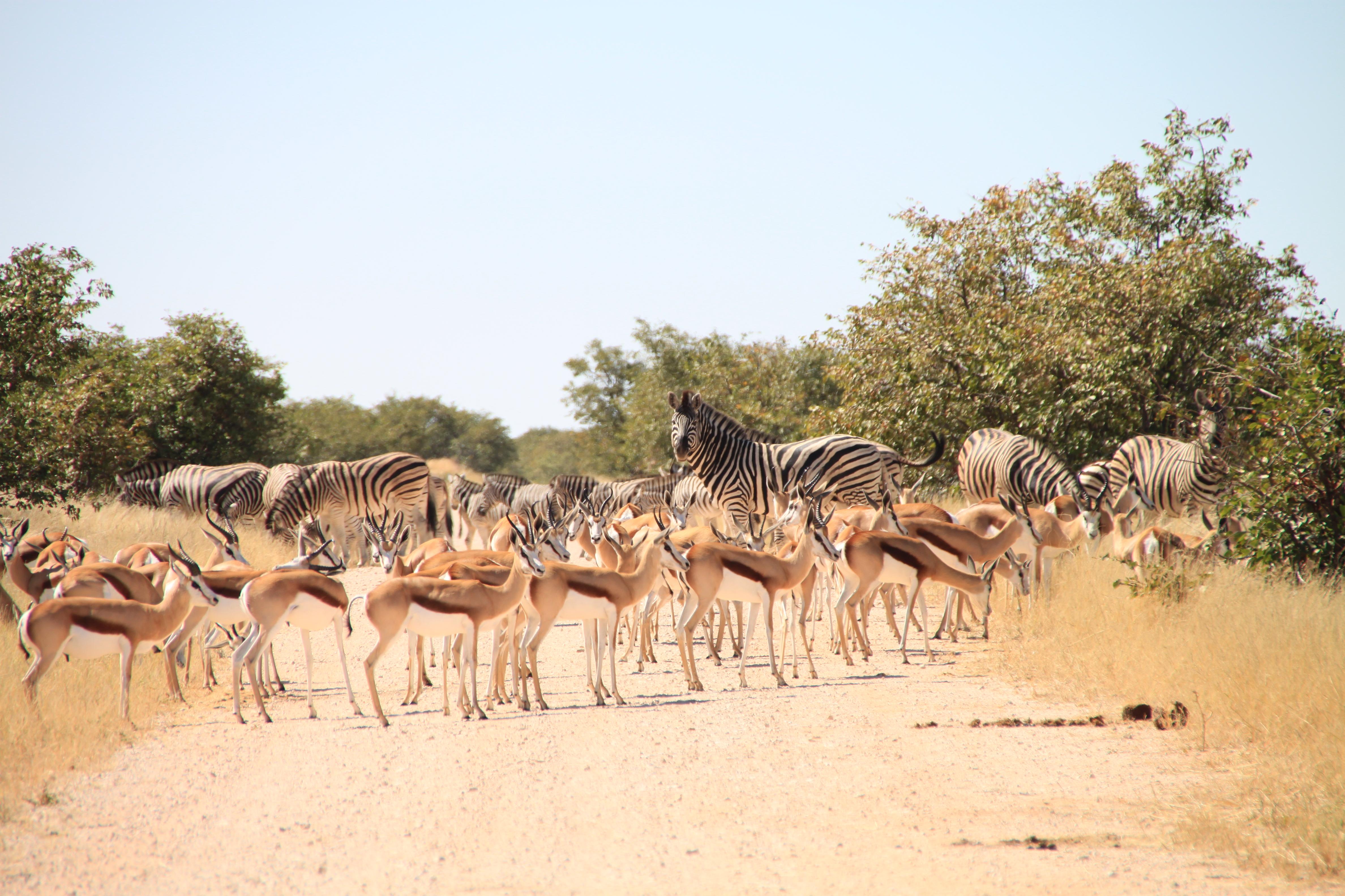 namibia_zum_kennenlernen