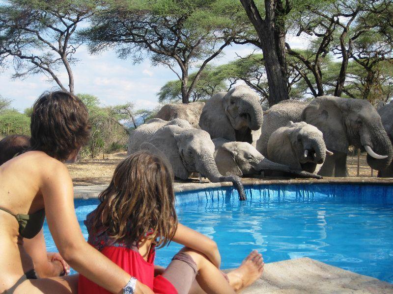 safari_amp_-kultur_-im_-sueden_-tanzanias