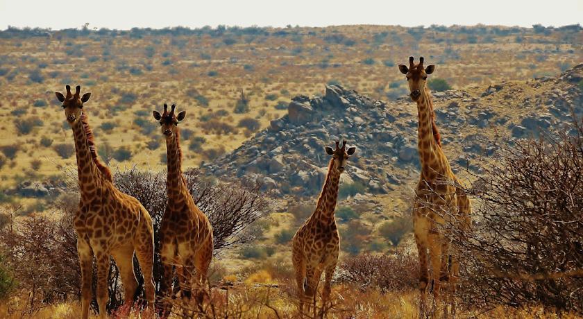 safari_durch_die_mitte_und_den_westen_sudafrikas