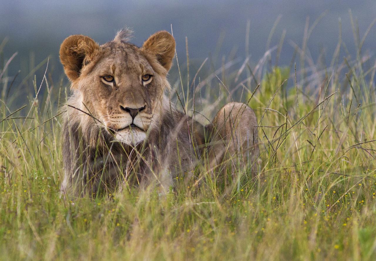 safari_ins_ostliche_kap