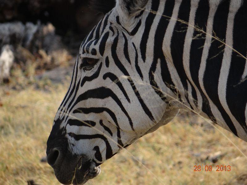 safari_von_victoria_falls_nach_swakopmund