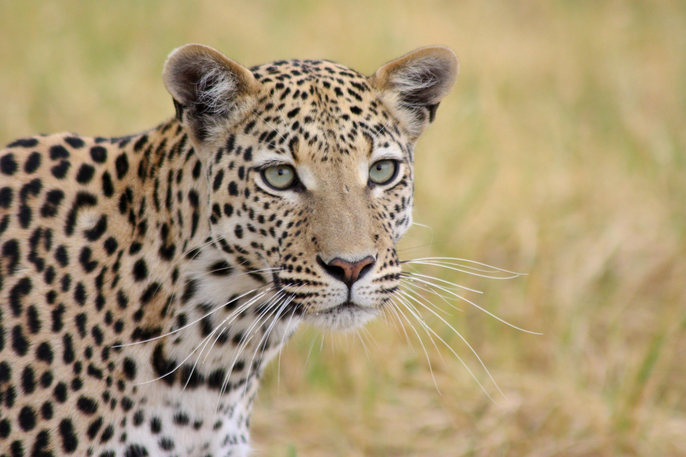 safarierlebnisse_in_botswana_zimbabwe