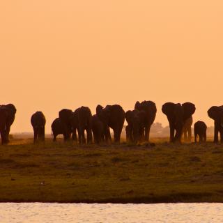 sunway_botswana_chobe_elephants_michieu_lourens_28_20171003_1082455046
