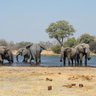 sunway_botswana_moremi_elephants_in_khwai_brucetaylor-5866_20171003_2063321841