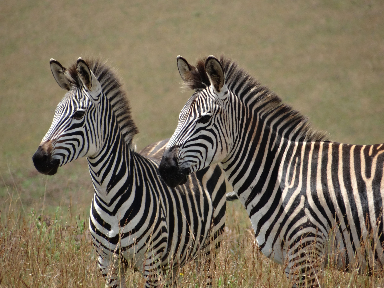 suedafrika_total_hoehepunkte_-der_-gardenroute_-und_-wildnis_-safari
