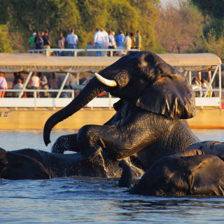 Chobe Safari Lodge3