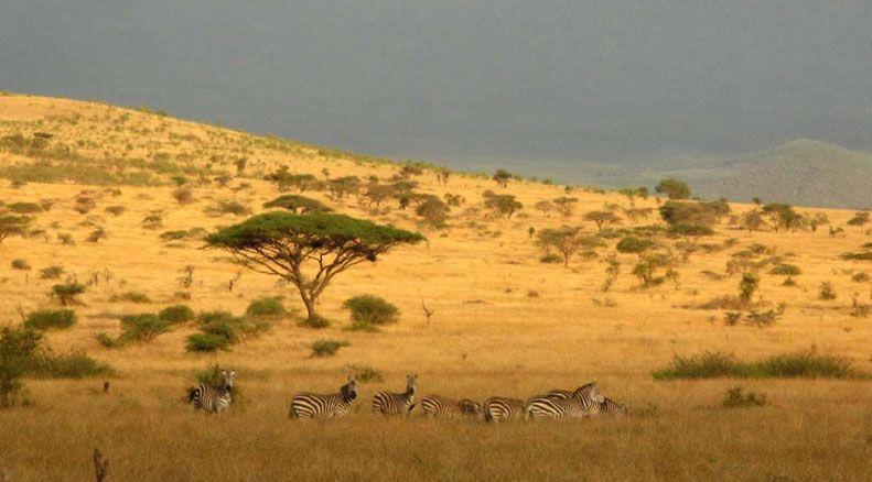west_kilimanjaro