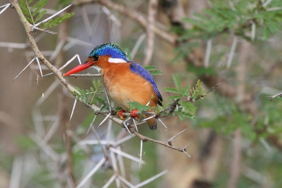 wildes_zambia_abenteuer_safari