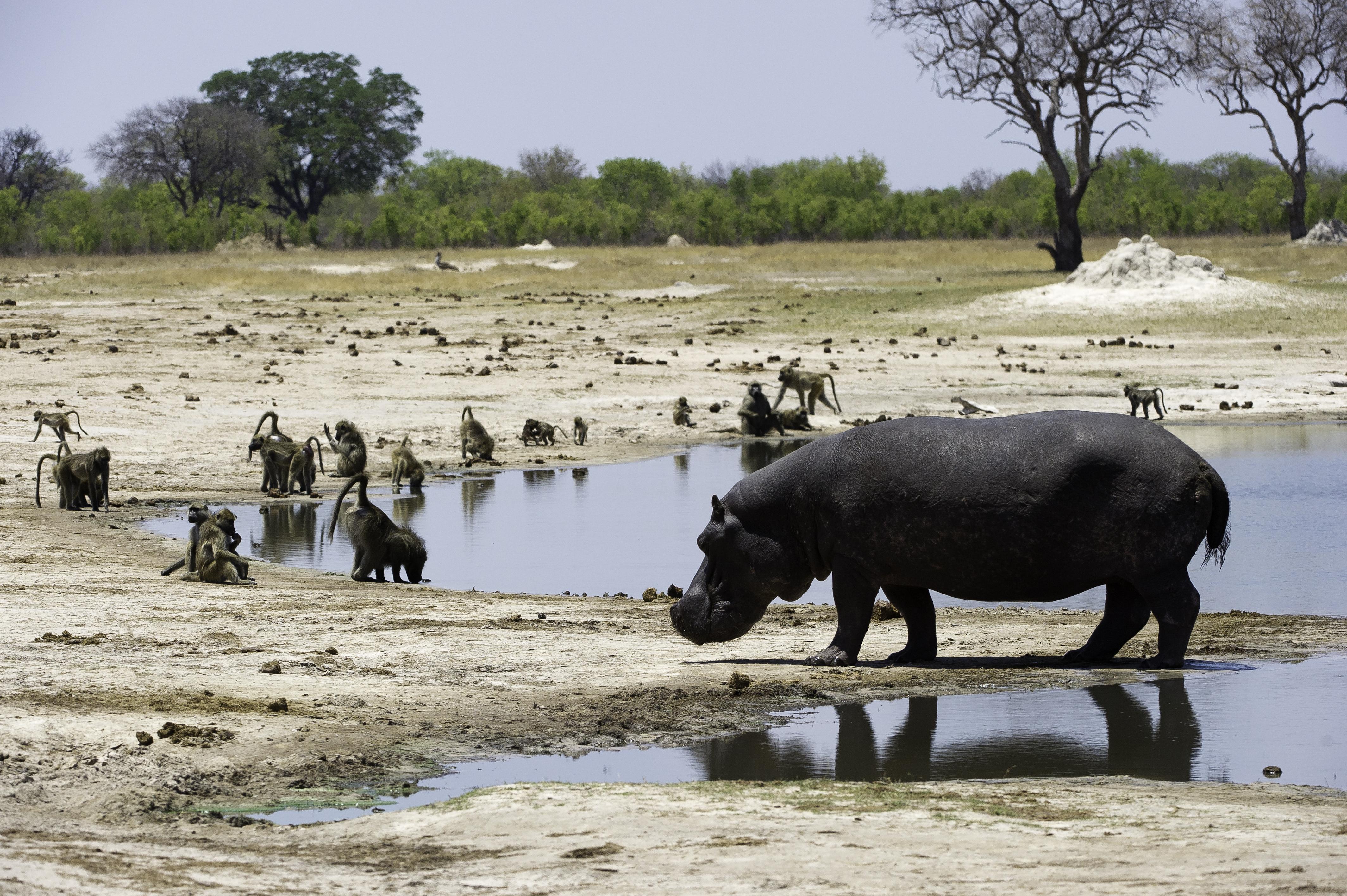 zimbabwe_camping_abenteuer