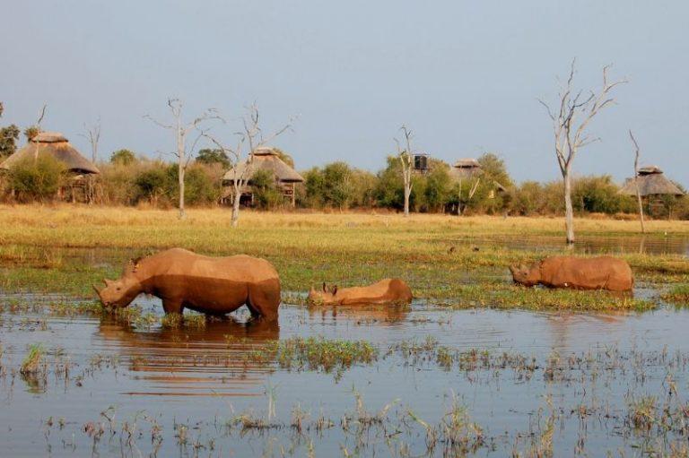 rhino-camp